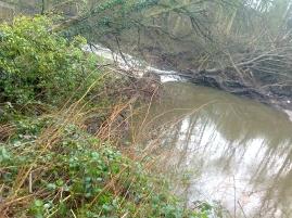 2016 jan 16 tree dam