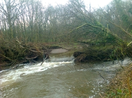 2016 jan 16 tree in bollin